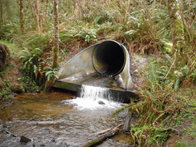 An undersized culvert near the Oregon Coast presents a barrier to fish and wildlife movement.