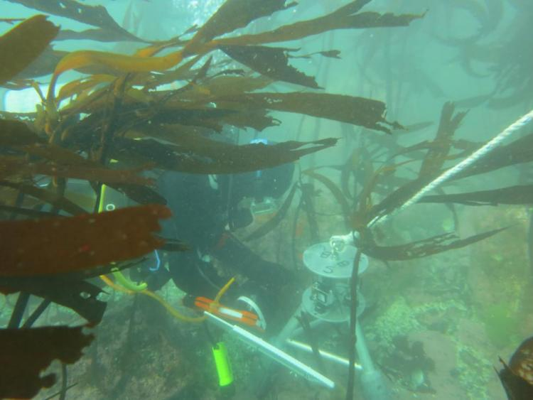 ODFW conducts research and monitoring in marine reserves.