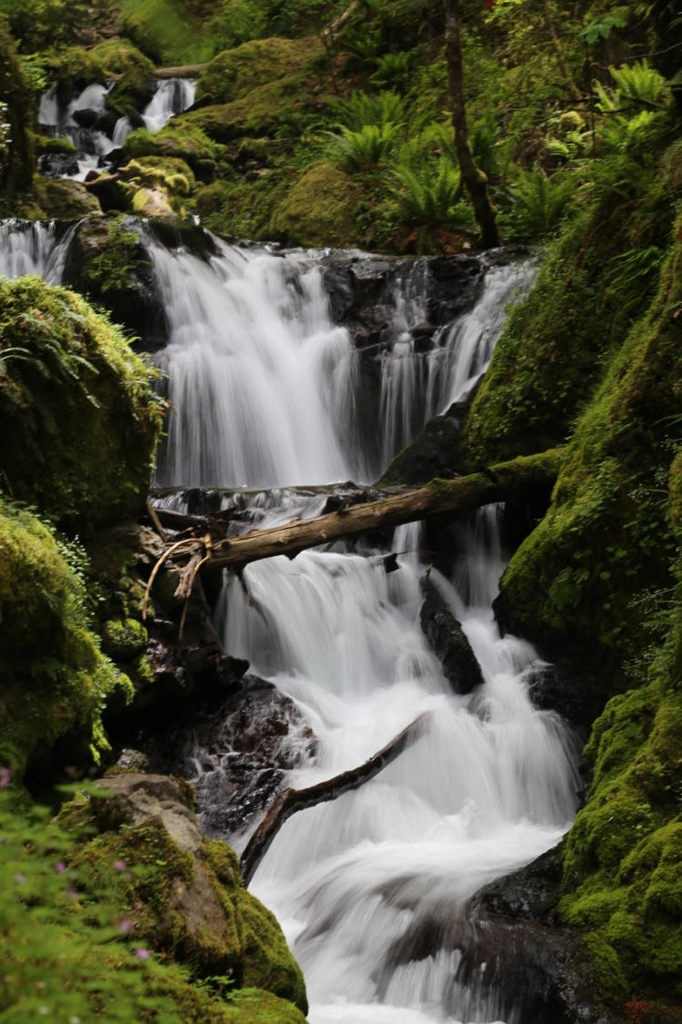Waterfall in western Oregon.